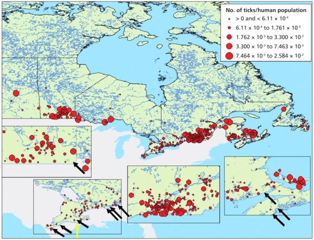 Répartition des tiques au Canada - © Odgen et al, 2009 CMAJ